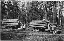 History Of The Lumber Industry In United States