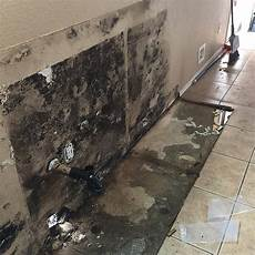 Black Mold Pictures Image Gallery Mold Badger To The Rescue