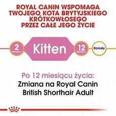royal canin kitten shorthair 10kg internetowy