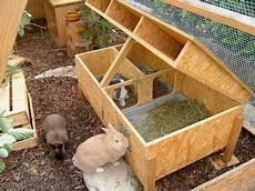 pin auf bunny rabbit stuff