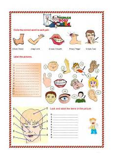 printable worksheets parts 18216 parts of the 2 worksheet free esl printable worksheets made by teachers