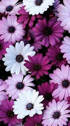 iphone purple flower wallpaper flowers iphone 7 wallpaper 750x1334
