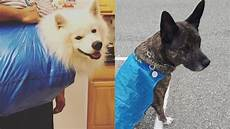 18 genius pets and their owners finding great new uses for