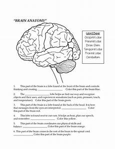 brain parts fill in the blank color teaching middle school science