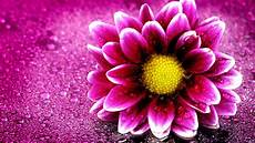 flower images hd wallpapers pink flower 4k wallpapers hd wallpapers id 19676