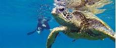 hawaii snorkeling snorkel tours all the islands