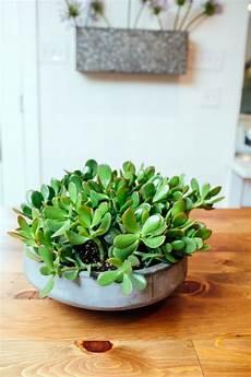 pflegeleichte zimmerpflanzen wenig licht 7 pflegeleichte zimmerpflanzen die wenig licht brauchen