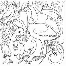 australia animals coloring pages 16900 coloriage animaux australie ancenscp
