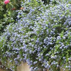 plante couvre sol persistant 201 pingl 233 sur flowers