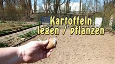 kartoffeln legen 2013