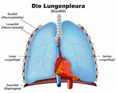 rippenfellentzündung schmerzen beim liegen lungenriss symptome ursachen und behandlung paradisi de