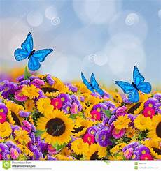 immagini sui fiori flowers garden with sunflowers and butterflies stock