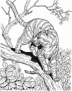 tiger in a jungle coloring page free printable coloring