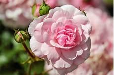 sfondi fiore foto gratis giardino fiorito flora gemma fiore fiori