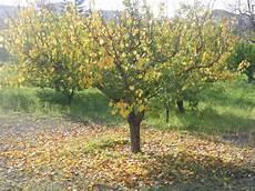 de pollenã a il re di pollena e l autunno carmine de cicco