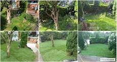 Vorher Nachher Bilder Baumpflegethiedes Webseite