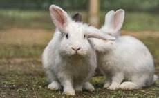 Wie Alt Werden Kaninchen Langes Und Gl 252 Ckliches Leben