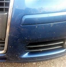 Insekten Entfernen Auto - fliegendreck insekten der frontscheibe entfernen