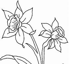 dibujos de la flor nacional de venezuela orchid coloring page