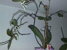 ableger einer orchidee vegetation daheim