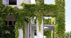 efeu zimmerpflanze pflege facade with greening for evergreen
