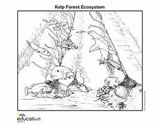 coloring pages ecosystem animals 16973 illustrations national geographic society