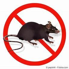 Rattenbekämpfung Ohne Gift - rattenbek 228 mpfung im garten ohne gift anleitung