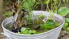 Zinkwanne Als Teich Garten