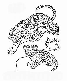 ausmalbilder leopard gepard zum ausdrucken