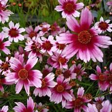 fleur vivace plein soleil les 22 meilleures images du tableau vivace soleil sur plantes vivaces plein soleil