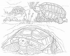 desert animals coloring pages printable 16950 printable coloring pages of desert animals coloring page coloring home
