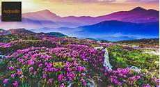 Flower Valley Wallpaper by Book Tickets To Valley Of Flowers A Magical Land Of