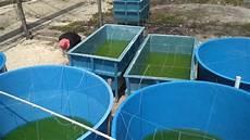 Kelompok Nelayan Terima Benih Ikan Nila Dan Emas Serambi