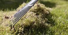 Moos Im Rasen Erfolgreich Bek 228 Mpfen Garden Tools Lawn