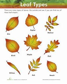 science worksheets leaves 12281 42 best images about trees and plants on cycles nature and parts of a flower