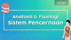 Bagaimana Anatomi Fisiologi Sistem Pencernaan Manusia