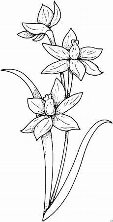 Malvorlagen Blumen Blumen Bilder Malvorlagen My Flowers