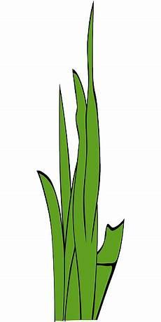 Gambar Kartun Rumput Gambar Kartun