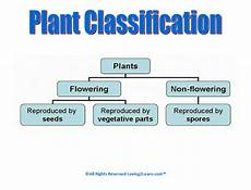 classifying plants worksheets 3rd grade 13524 seeds plants and trees plant classification it has a link to a on plant