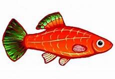 Ausmalbilder Bunte Fische Ausmalbilder Bunte Fische Batavusprorace