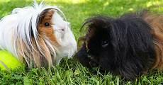 Kleine Haustiere Liste - diese tiere eignen sich am besten f 252 r eine kleine wohnung