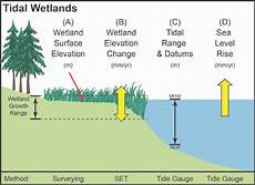 Conceptual Diagram Showing The Relationship Among Wetland