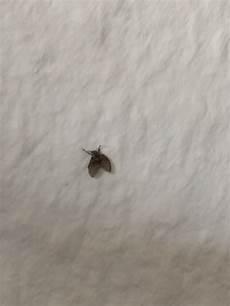 Ungeziefer In Der Wohnung - fliegen ungeziefer in der wohnung 2