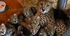 baby zoo animals born since fall 2017