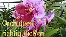 wie pflegt orchideen orchideen richtig gie 223 en anleitung orchideengew 228 chse