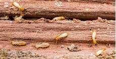 The 5 Types Of Termites You Need To About