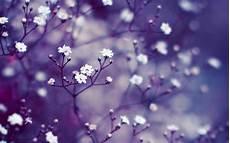Flower Wallpaper Macbook Air by Nature Flowers Macro Mac Wallpaper Allmacwallpaper