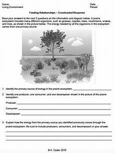 worksheet feeding relationships constructed response editable