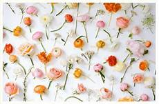 gallery flower wall ideas 14 flower wall ideas for an unforgettable wedding philly