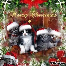 christmas cats merry mas ramblings of an asparagus